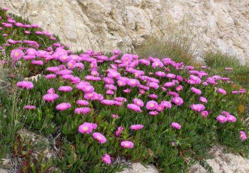 Топ-6 самых агрессивных видов растений в мире