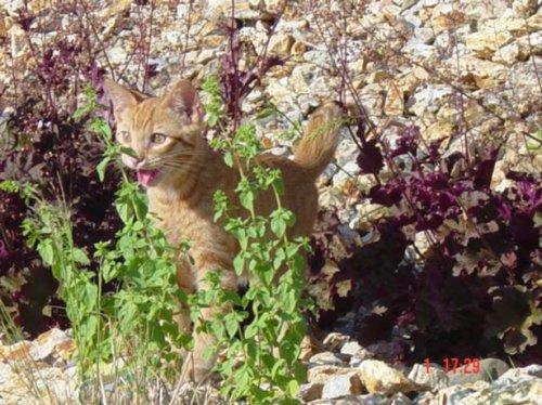 Кошки на первой прогулке (19 фото)