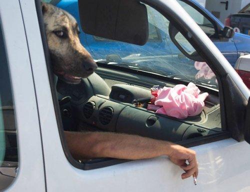 Удачные стоп-кадры с собаками (20 шт)