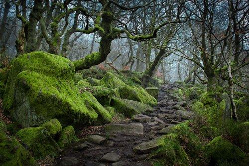 Волшебные тропы, которые так и манят (28 фото)