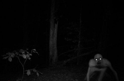 Топ-10 самых странных и необъяснимых существ нашей планеты