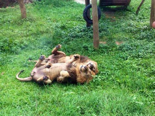 Забавные фотографии из зоопарков (21 шт)