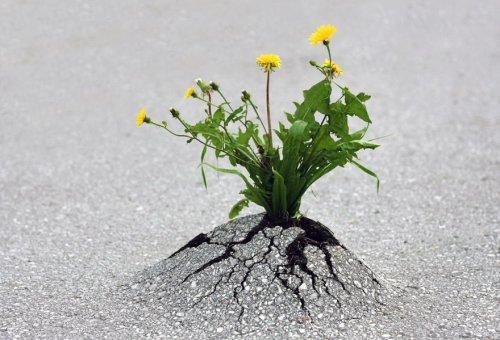 Растения, которые не сдаются (24 фото)