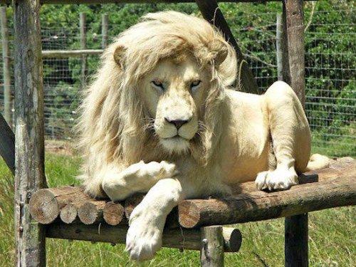 25 Самых гламурных фотографий животных