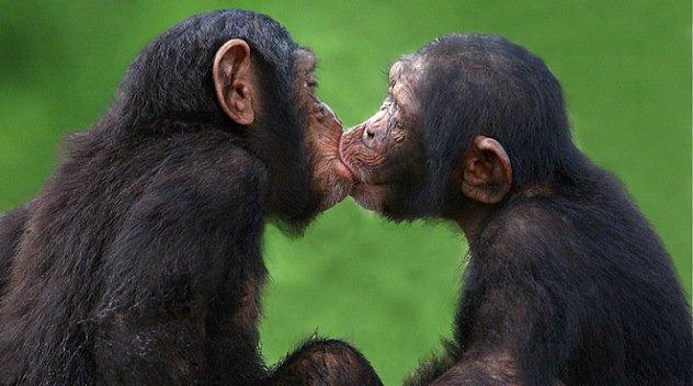 Картинки по запросу приколи про поцілунок