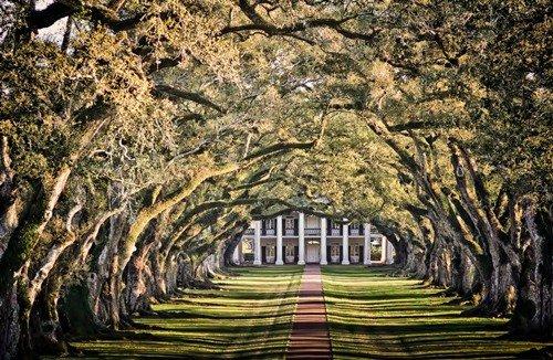 25 Сказочно красивых туннелей из деревьев, которые заставляют забыть о реальности