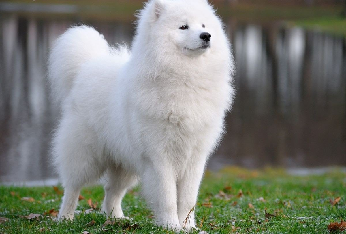 Самые дорогие собаки мира