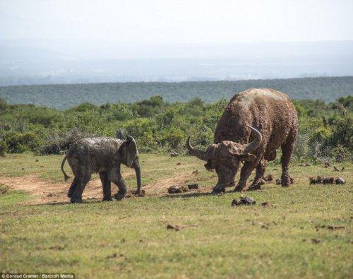 Вы видали, как слоны летают? (8 фото)