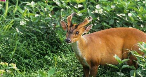 Топ-25 самых странных животных, о которых вы могли не знать
