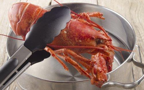 А знаете ли вы: омары и крабы на самом деле чувствуют боль