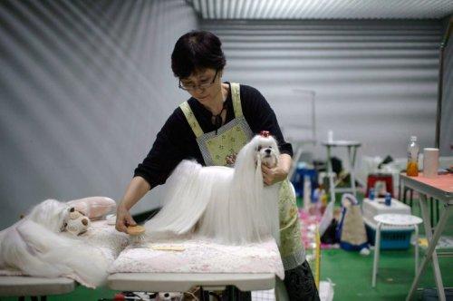 Участники выставки собак, прошедшей в Южной Корее (19 фото)