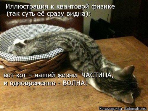 Новая котоматрица (37 фото)