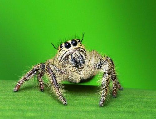 Топ-25 Очаровательных пауков, которые не так страшны, как вы думаете