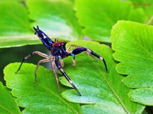Топ-25 Очаровательных пауков, которые не так страшны, <strong>пауками</strong> как вы думаете
