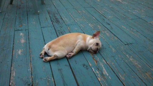 Собаки-жизнь человека украшаки (33 фото)
