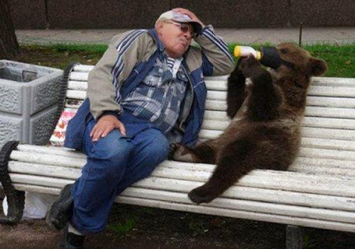 Медведи на улицах российских городов (27 фото)