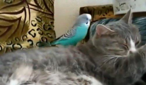 Видеоприколы с кошками