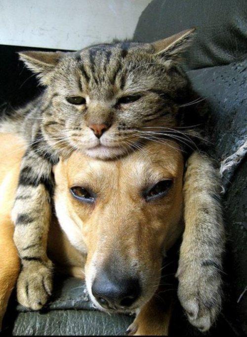 Фотографии с животными, которые поднимут вам настроение (38 шт)