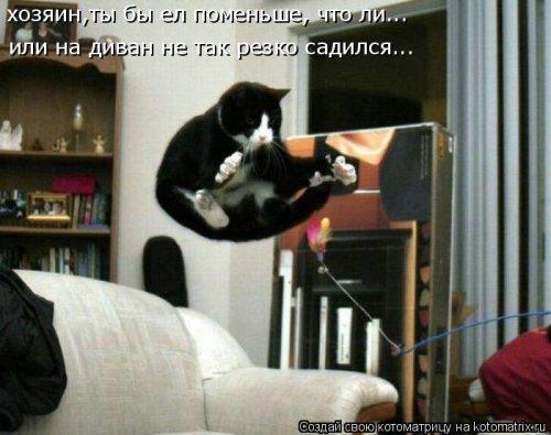 Новая котоматрица для всех! (38 фото)