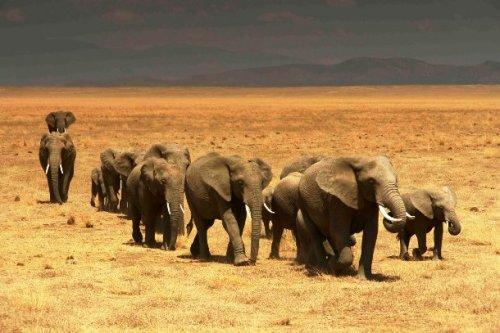 Топ-25 прикольных и необычных фактов про слонов