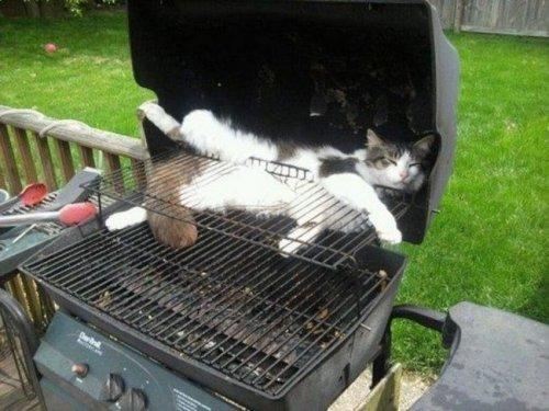 Любопытные кошки, оказавшиеся в самых неподходящих местах (20 фото)