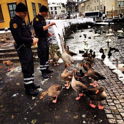 Добрый Инстаграм полиции Рейкьявика (24 фото)