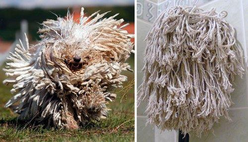 Собаки и их двойники (14 фото)