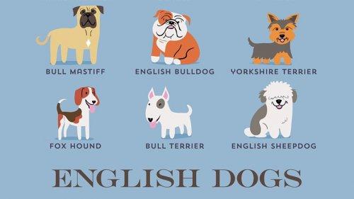 Происхождение пород собак в очаровательных постерах Лили Чин (11 шт)