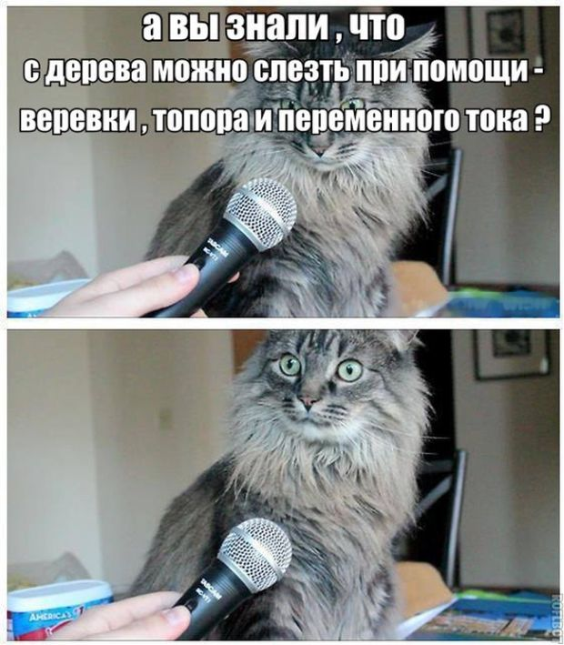 polozhu-bolshoy-i-tolstiy