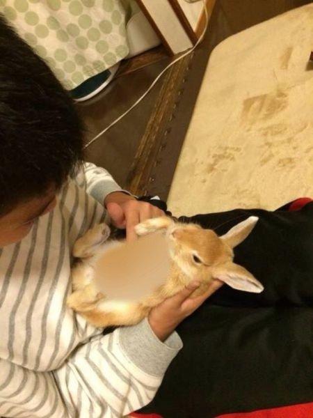 Новая тенденция в Японии: кролики в качестве футляра для смартфона (8 фото)