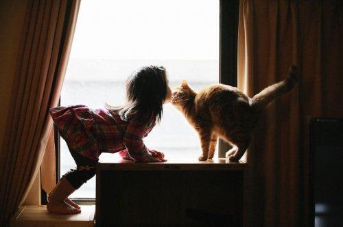 Снимки, греющие душу: малыши и кошки (20 фото)