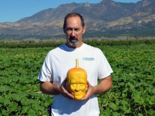 Фермер из штата Калифорния выращивает тыквы для Хэллоуина в виде Франкенштейна (3 фото)