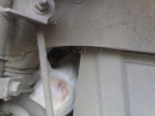 Спасение кота, прокатившегося порядка 15 км под капотом машины (6 фото)