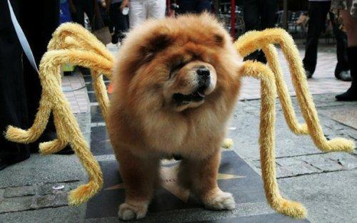 Костюмы для собак на Хэллоуин (25 фото)