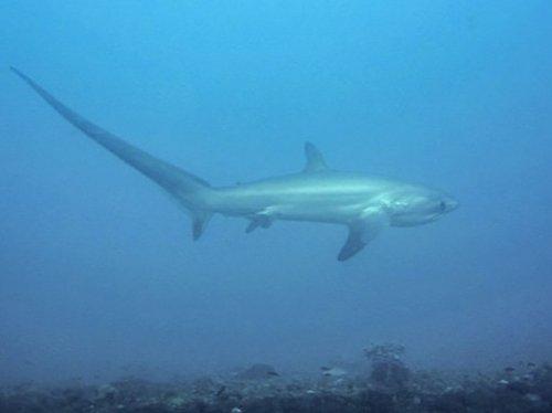 10 Самых странно выглядящих акул