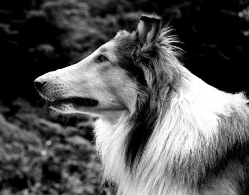 Топ-10 животных, чьи достижения затмевают наши собственные
