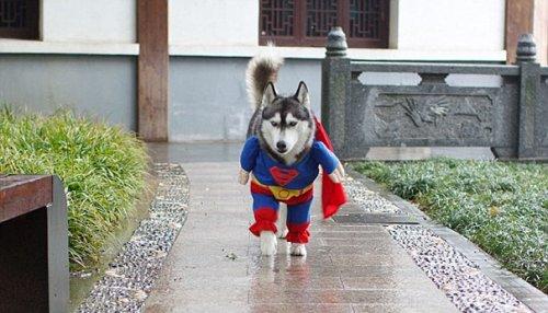 Ужасно прелестные костюмы на Хэллоуин для ваших питомцев (26 фото)