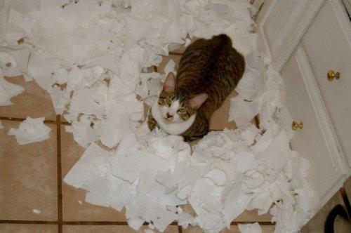 Хулиганистые коты и кошки (16 фото)