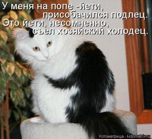 Новая котоматрица (37 шт)