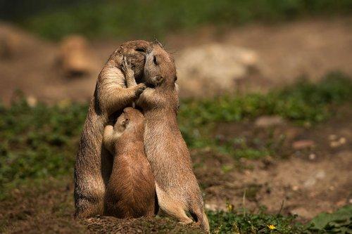 Семейные портреты животных (22 фото)