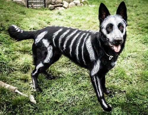Костюмы скелета из нетоксичной краски для животных (10 фото)