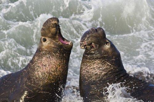 Топ-10 удивительных новых открытий о животных