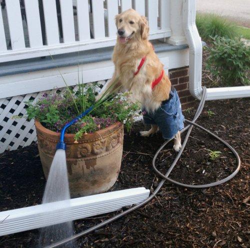 Собака, которая не понимает, что она здесь делает (14 фото)