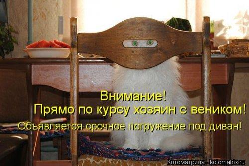 Свежая котоматрица (32 фото)
