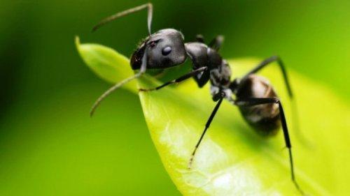 Топ-25 прикольных фактов про муравьёв, которые вы могли не знать