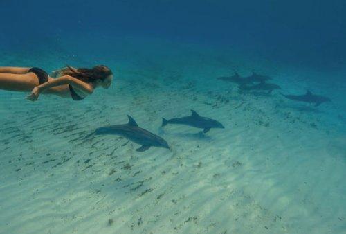 Подводные фотографии Елены Калис (32 шт)