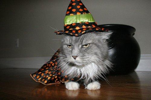 Домашние питомцы, недовольные своими хэллоуинскими костюмами (21 фото)
