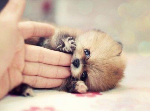 Фотографии очаровательных щенков, которые поднимут вам настроение (17 шт)