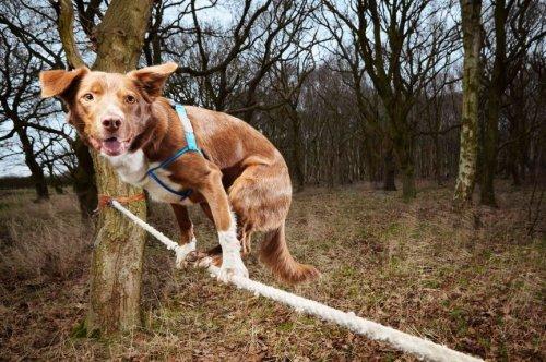 Топ-10 самых интересных животных, побивших мировой рекорд Гиннеса
