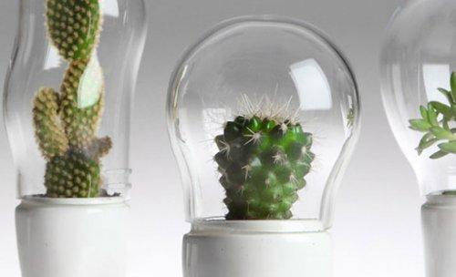 Террариумы для растений на ножках от Маттео Чибика (12 фото)